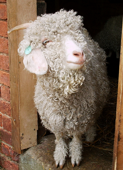 Mohair Yarn - Dahlia the Mohair Goat